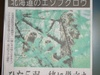 fukurou_004