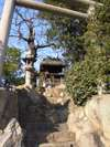 Fuyu_173_1