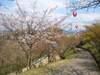 Haru2_035