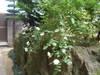 Wagaya5_052