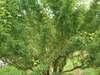 Wagaya5_086