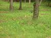 Wagaya5_092
