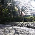 こんぴら山・桜道