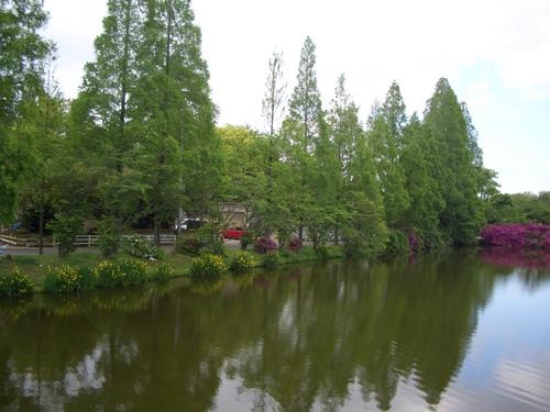 メタセコイアの池