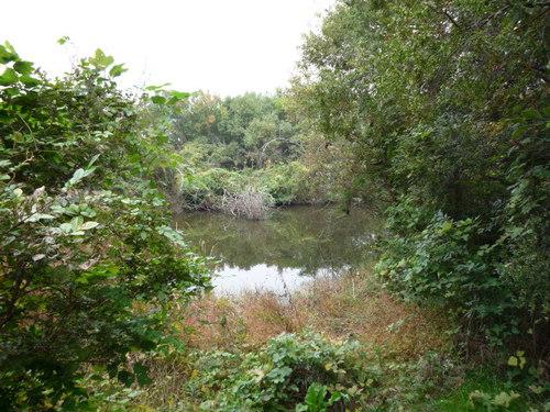 静もれる秋の池